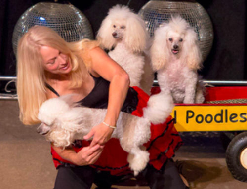 Michelle's Magical Poodles